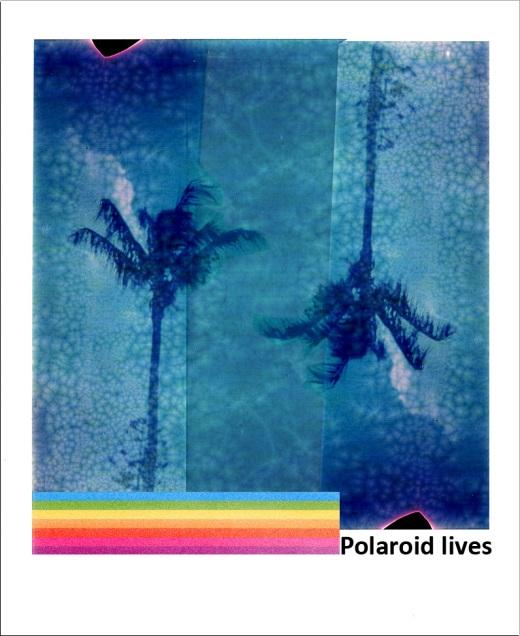Polaroid Lives