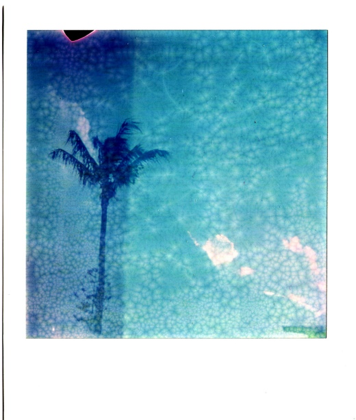 A Polaroid palm tree