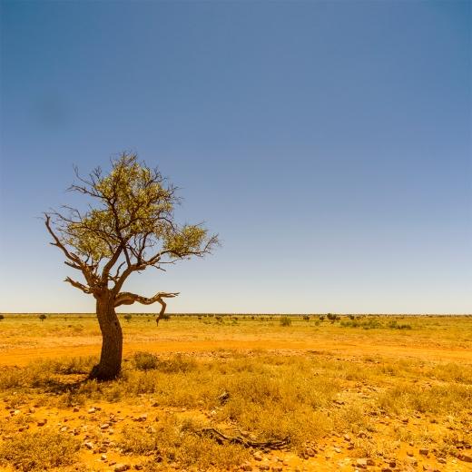 [erfect desert tree